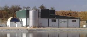 indústria de curtição de azeitonas